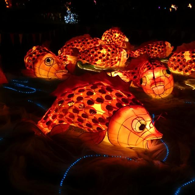 """""""Koi Fish Handmade Chinese Lantern"""" stock image"""