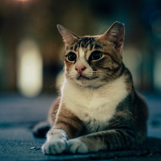 """Beautiful street cat at night"" stock image"