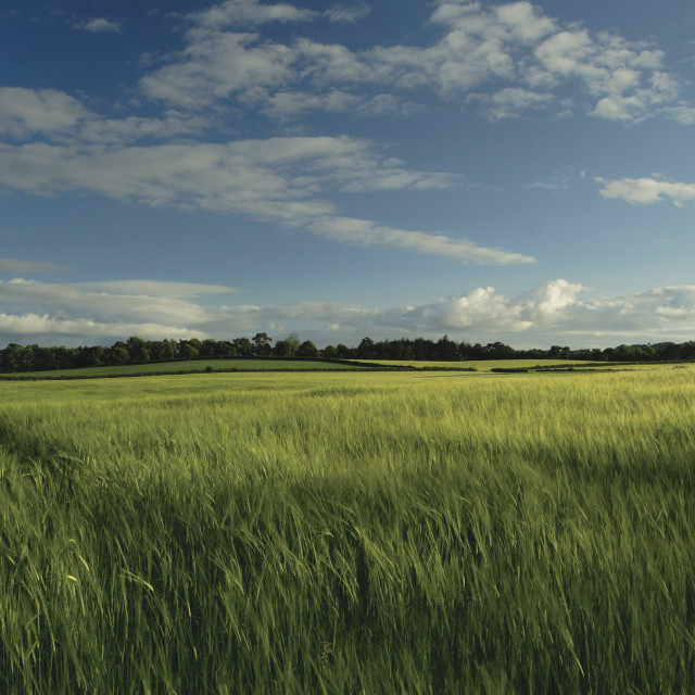 """Countryside near Alloway"" stock image"