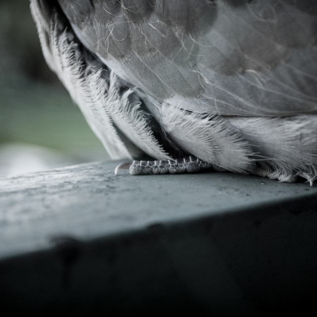 """Claw of a bird"" stock image"