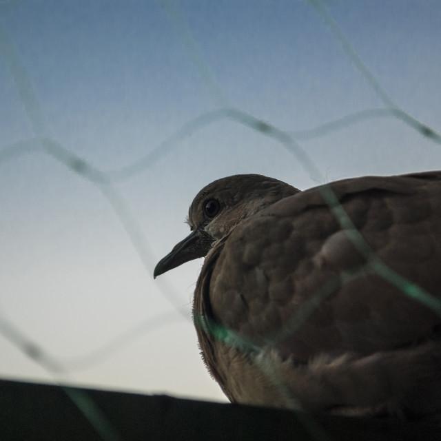 """Bird and sky"" stock image"