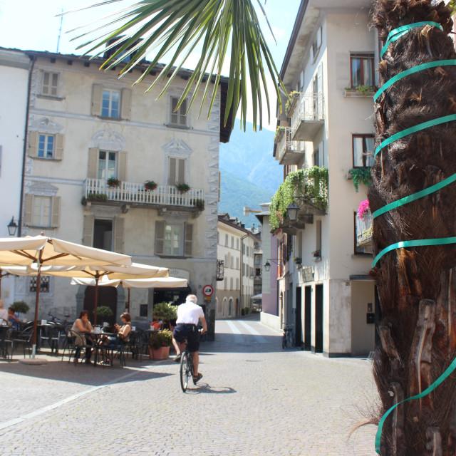 """Piazza Pestalozzi - Palm"" stock image"