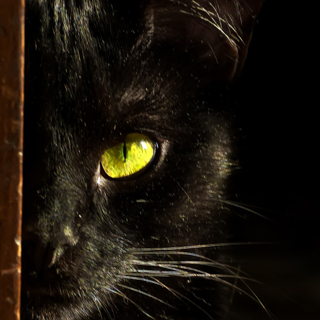 """""""The eye of the cat"""" stock image"""