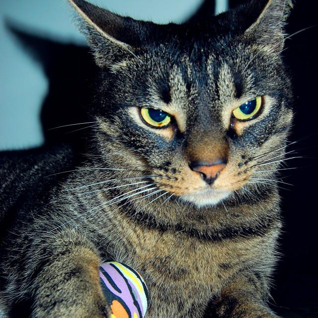 """Pro cat model"" stock image"