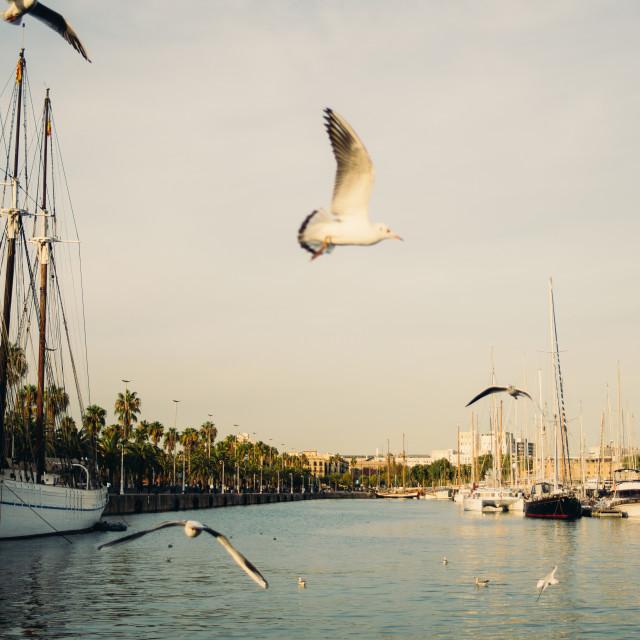 """Barcelona Port and Seagulls"" stock image"