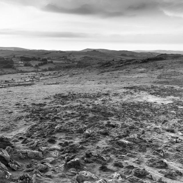 """""""The wilds of dartmoor"""" stock image"""