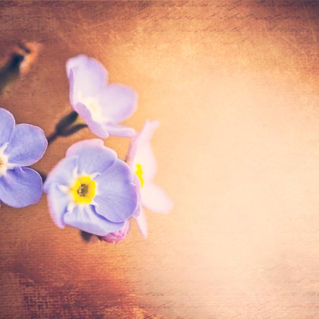 """small blue flowers"" stock image"