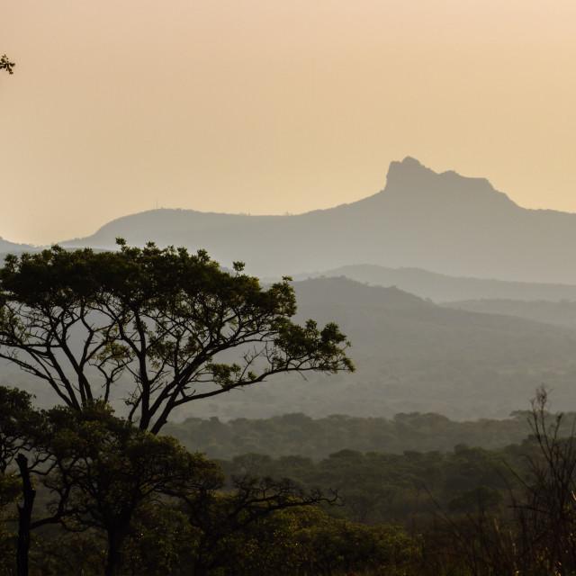 """""""Wild landscape in Kruger National park, South Africa"""" stock image"""