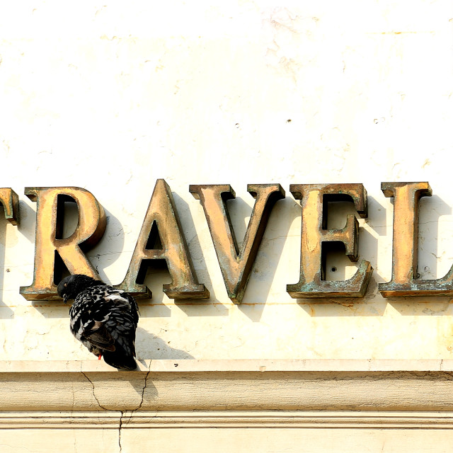 """Travel and pigeon"" stock image"