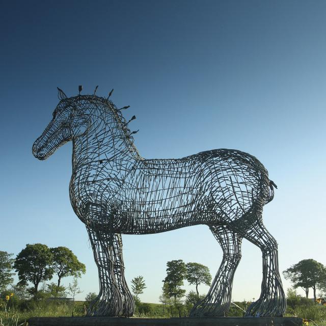"""The Heavy Horse"" stock image"