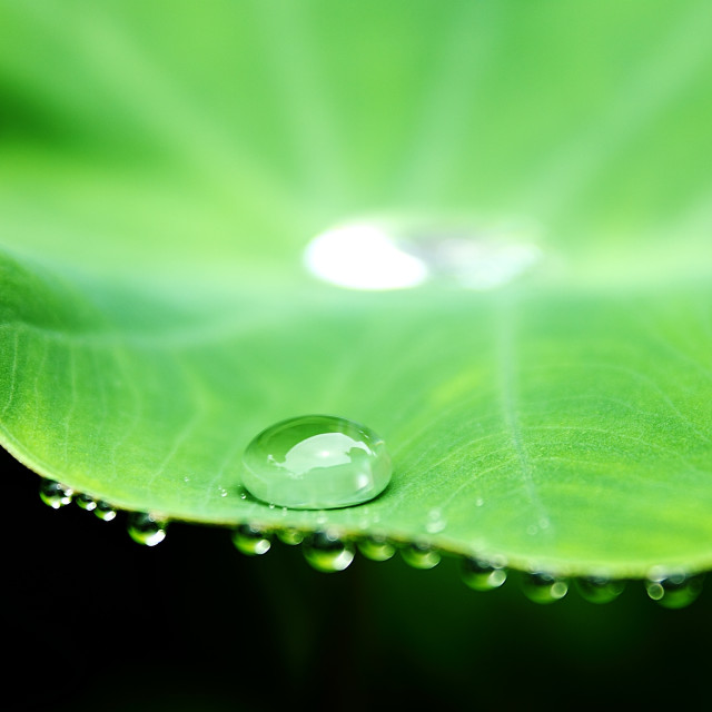 """Drop On A Leaf"" stock image"
