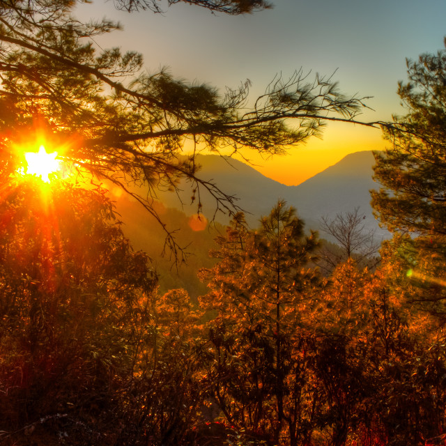 """""""Sunset Forest"""" stock image"""