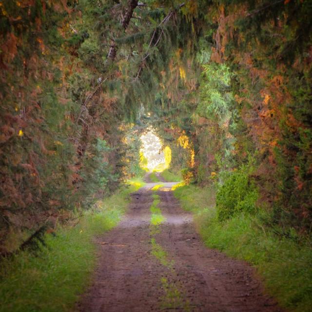"""Fairytale path"" stock image"