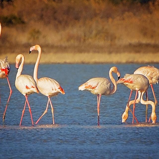 """Flamingo family"" stock image"