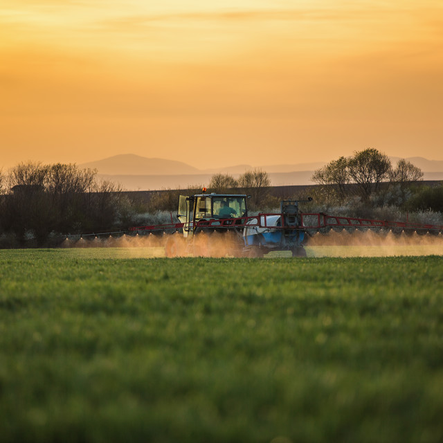 """Tractor spraying wheat field with sprayer"" stock image"