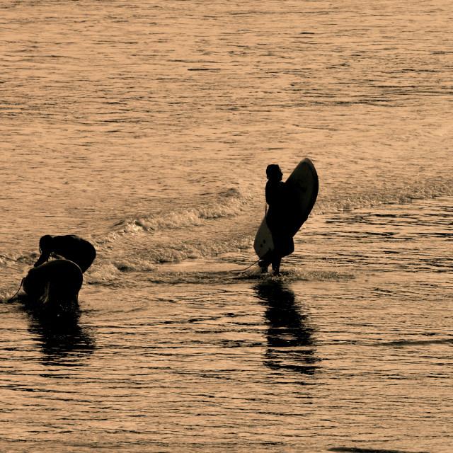 """Golden Surfers"" stock image"
