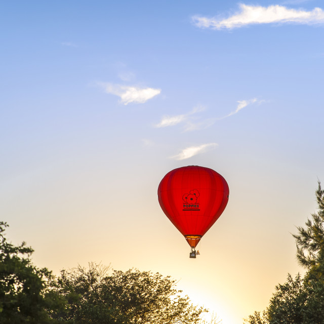"""Red Poppies Hot Air Balloon"" stock image"