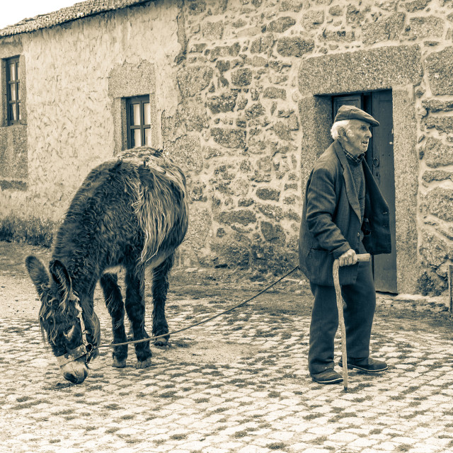 """An Old Man And A Donkey"" stock image"