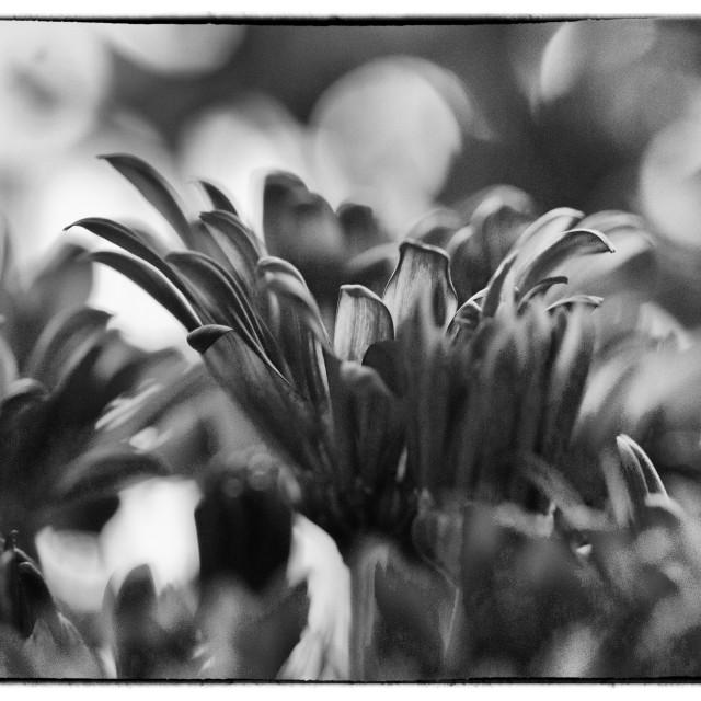 """The bokeh flowers"" stock image"