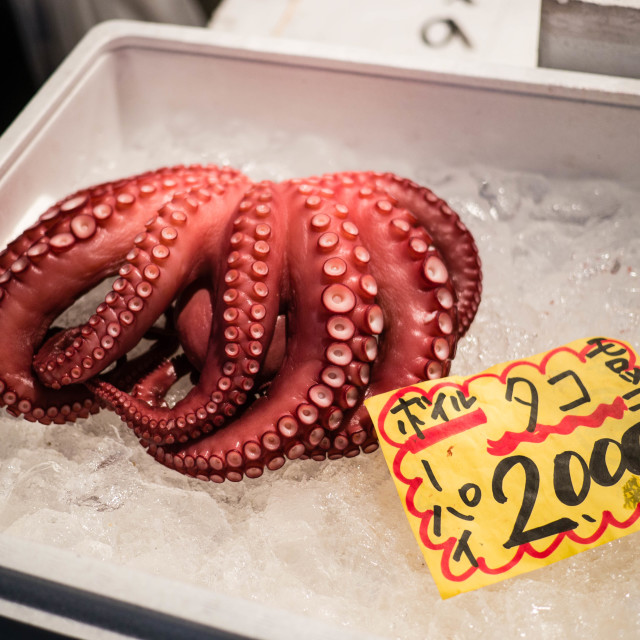 """Octopus For Sale"" stock image"