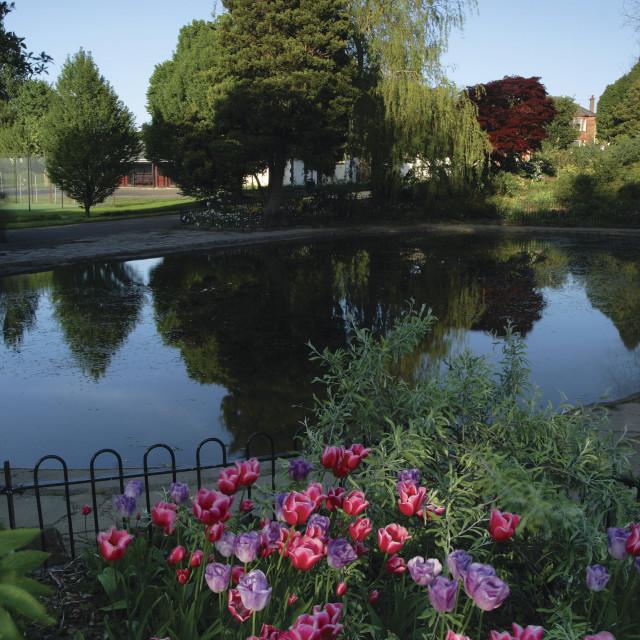"""Newlands Park"" stock image"