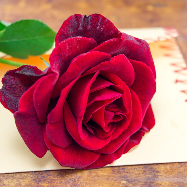"""""""Red rose on a romantic envelope"""" stock image"""