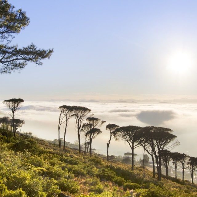 """""""Sunrise Above the Clouds - Signal Hill, Cape Town, South Africa"""" stock image"""