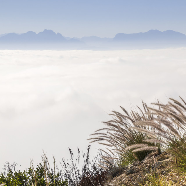 """""""Grasses at the Edge of Heaven - Signal Hill, Cape Town"""" stock image"""