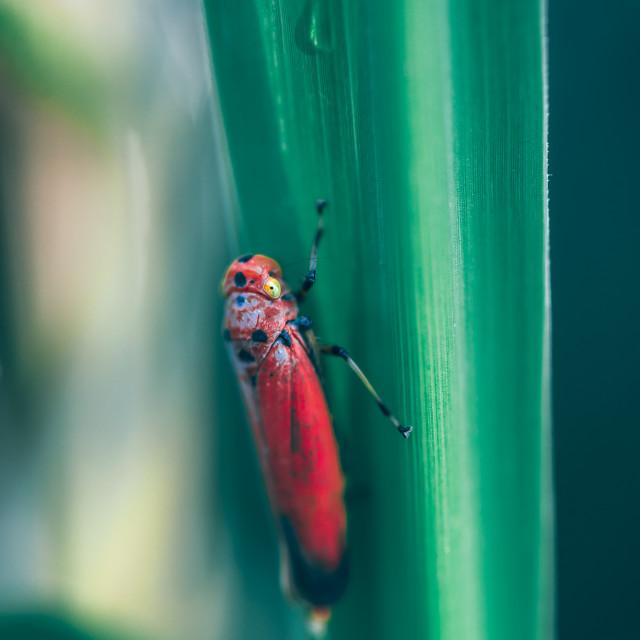 """""""Red Hopper"""" stock image"""