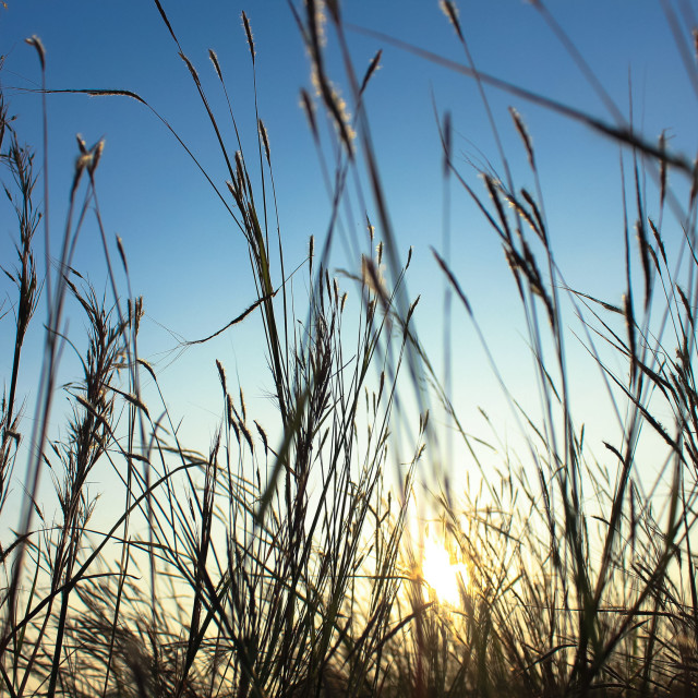 """Grass and sunset"" stock image"