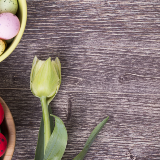 """Colorful Easter eggs on bowl and tulip"" stock image"