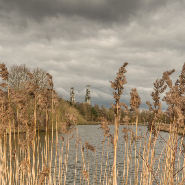 """""""Pit through the reeds"""" stock image"""