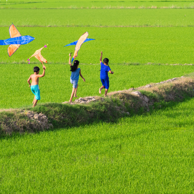 """happy kids play kite in the green rice field"" stock image"