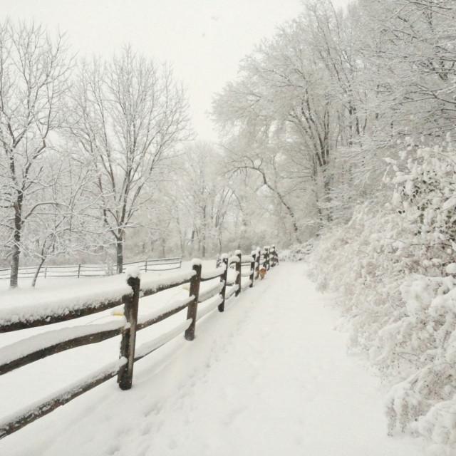 """rural landscape in snow"" stock image"