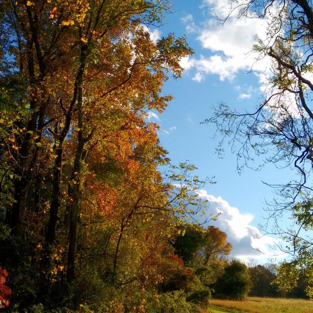 """rural walking path in autumn light"" stock image"
