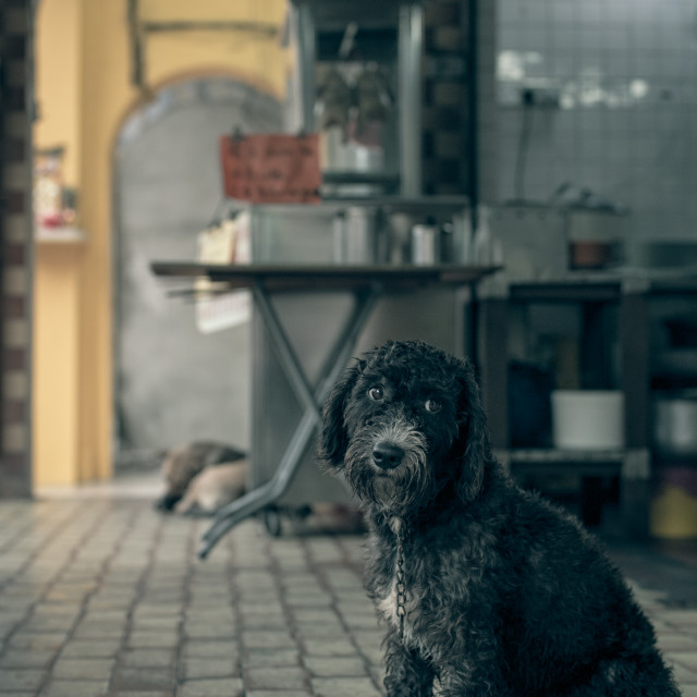 """Forlorn Street Dog"" stock image"