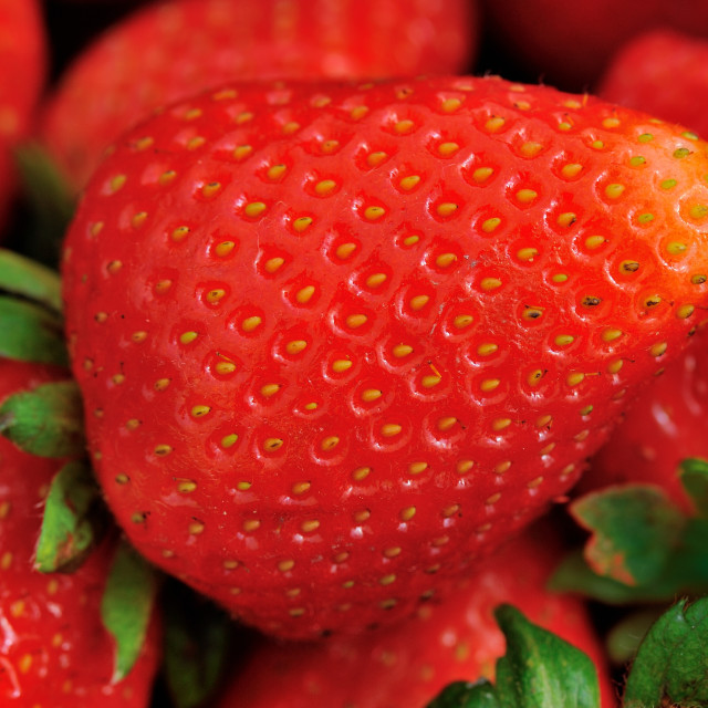 """Strawberry in XXL"" stock image"