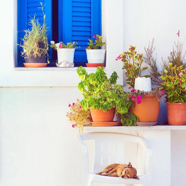 """Dog sleeping in front of a blue window, Akrotini village, Santorini, Greece"" stock image"