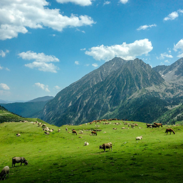 """""""A Herd in the Mountains"""" stock image"""