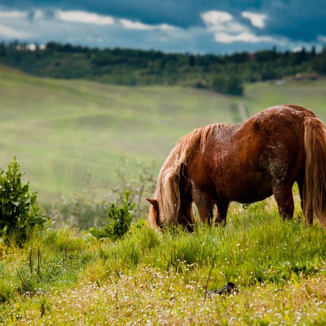 """Horse in Tuscany"" stock image"