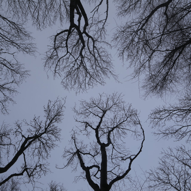 """Winter Trees"" stock image"