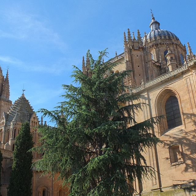 """Salamanca Cathedral From The Garden"" stock image"