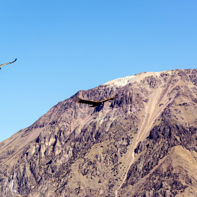 """Colca Canyon and Condors"" stock image"
