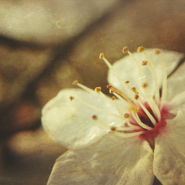"""""""Early spring blossom"""" stock image"""