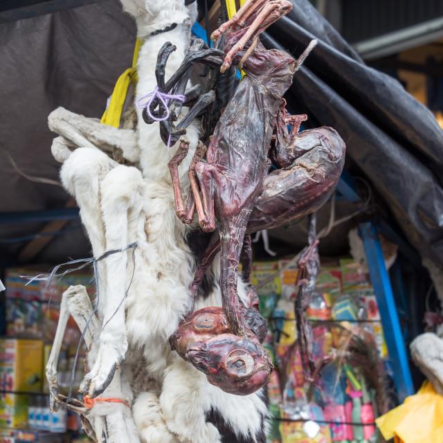 """Dead Llamas in a Market"" stock image"