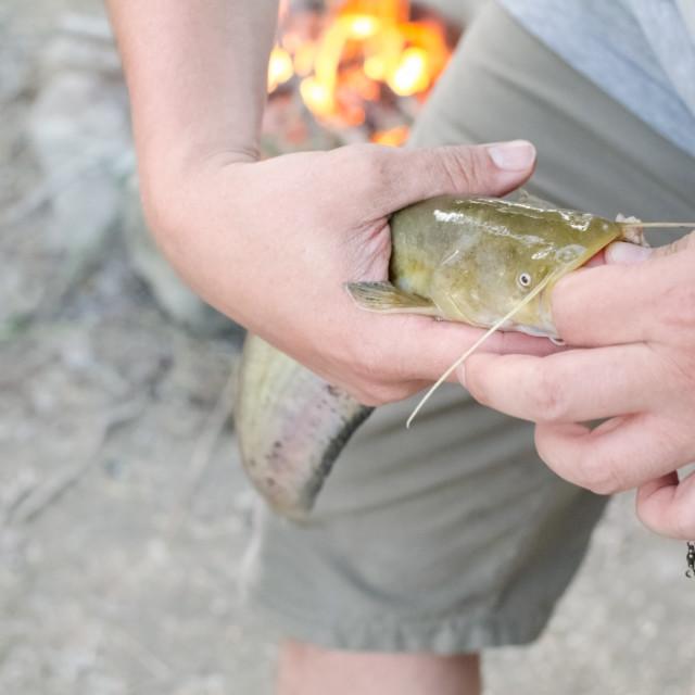 """Fisherman Removing Hook Closeup"" stock image"
