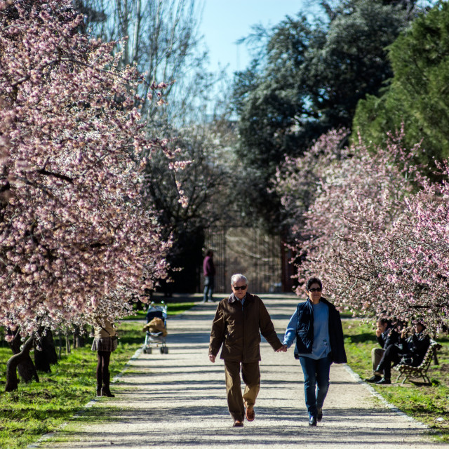"""""""Couple and flowered trees"""" stock image"""