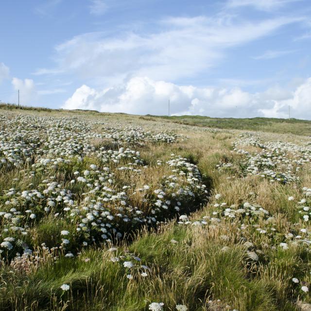 """Cornish Fields"" stock image"