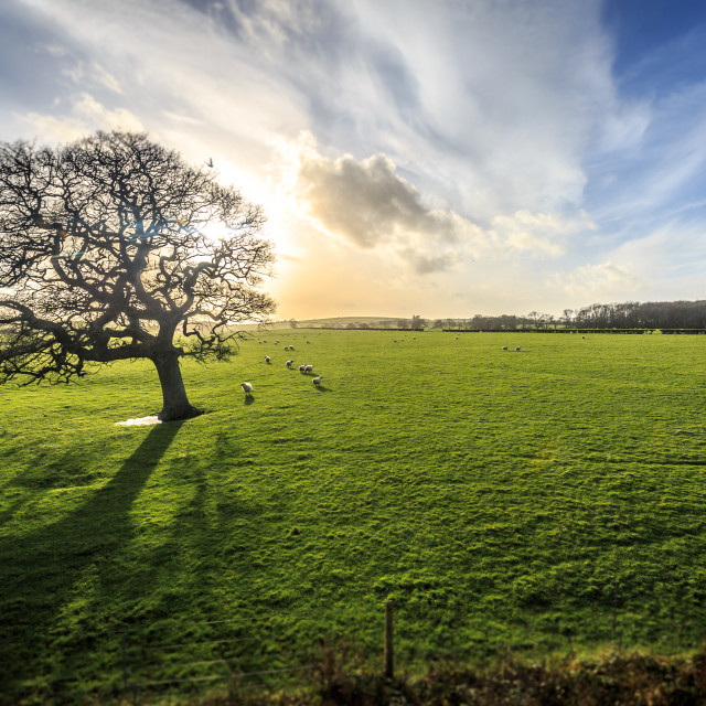 """Country field scene on the Isle of Wight"" stock image"