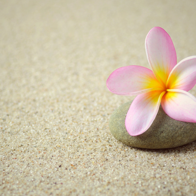 """""""Frangipani flower on a zen stone with copy space"""" stock image"""